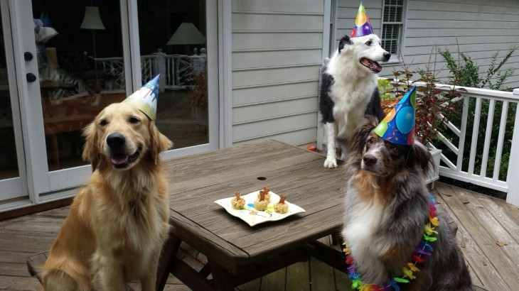 4q1hm-birthday-dogs