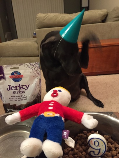 He sure wasn't feeling the birthday hat!